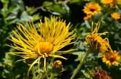 Tobermory Garden